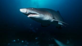 Hajers historie og evolution