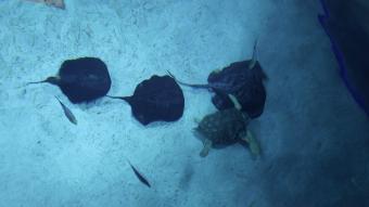 Havskildpadde satte en stopper for rokkeromantik