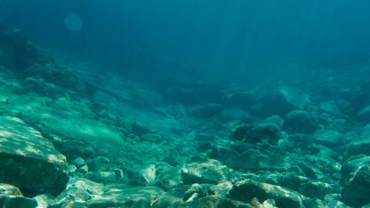 Kan fiskar trivas vid återskapade stenrev?