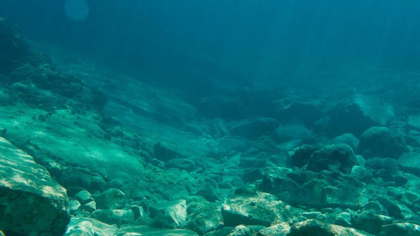 Kan fisk lide genskabte stenrev?
