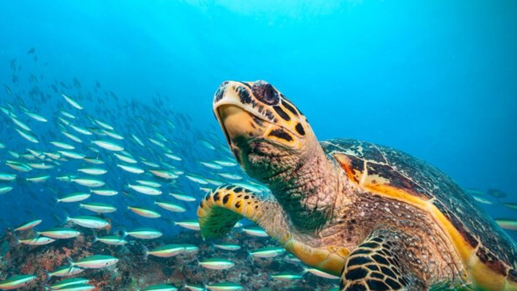 Red havskildpadderne