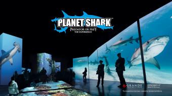 Planet Shark