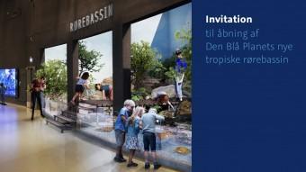 Invitation til åbning af Den Blå Planets nye tropiske rørebassin