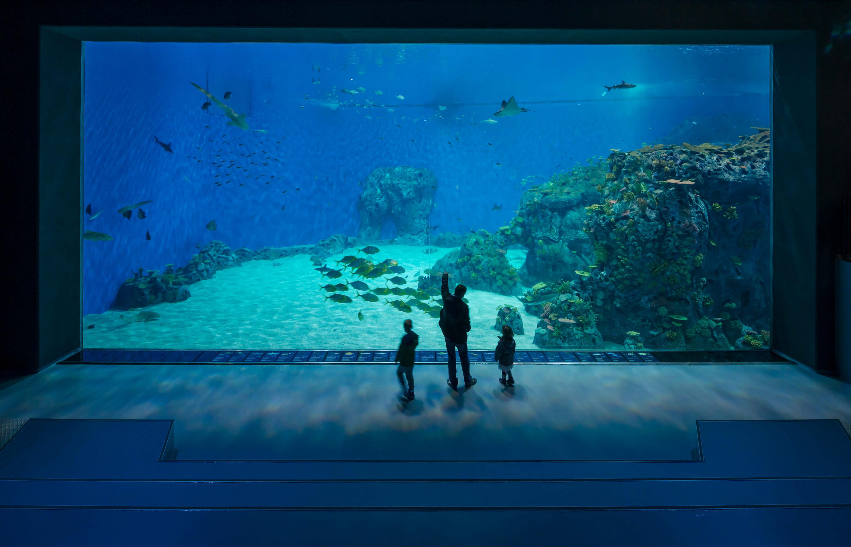 Den Blå Planet Ocean