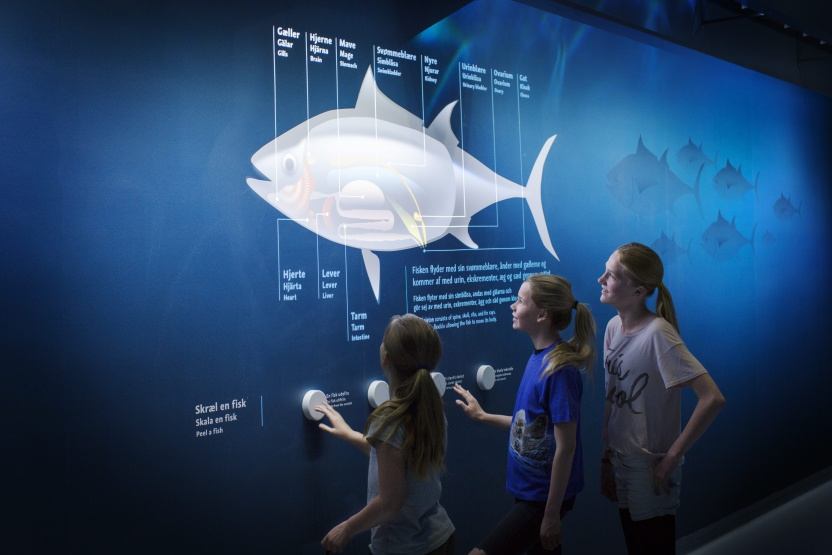 Skræl en fisk udstilling