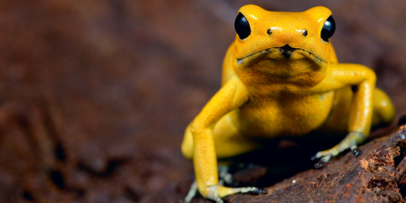 yellowfrog